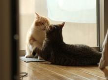 上島竜兵さんと出川哲朗さんのキスを彷彿させる名シーン勢い余ってチュッ