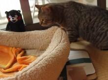 ネコもたまげた。くまモンおしゃべりぬいぐるみで寝起きドッキリ
