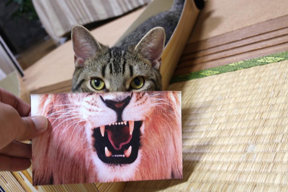 これがなんとかベストなかんじです。ねこライオン
