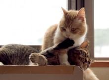 猫同士なめる意味、さぁグルーミングの始まりだぜぇ!