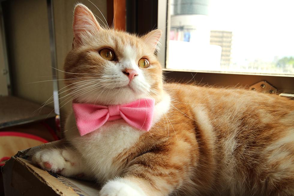 紳士ならばぜひマスターしたい蝶ネクタイ