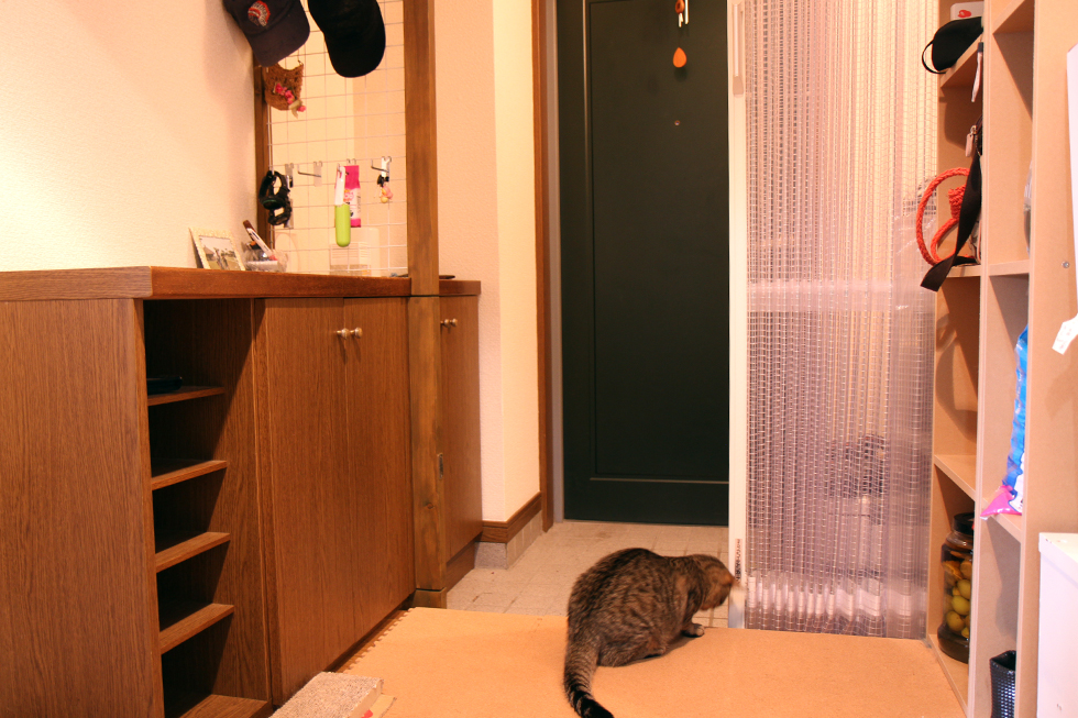 カーテンを開けたところ、玄関扉はまだ閉まっているので安心です。