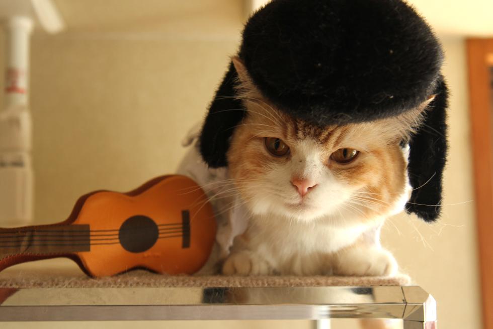 ただ首を噛まれてニャーって鳴いて、そしたら猫だ。