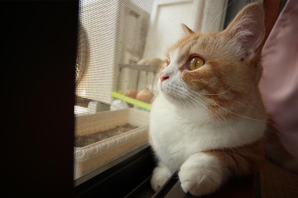 お気に入りの窓際で寛いでおるところをみておりますと