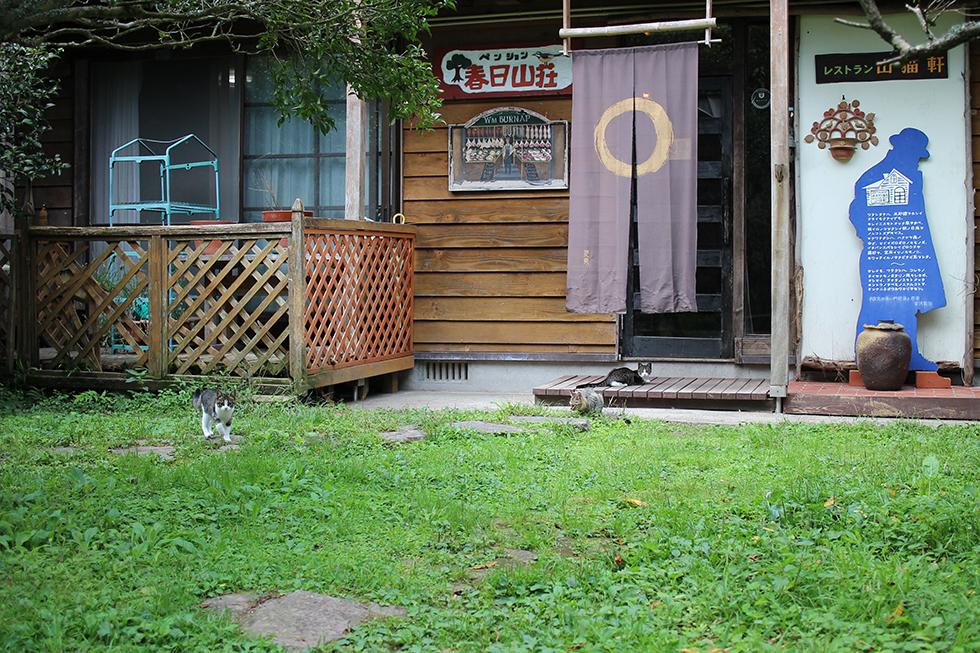 小径を抜けるとお店の玄関に仔猫が3匹お出迎え