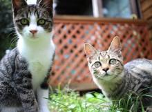 (左)テンさん(右)キッコさんやんちゃ盛りの6ヶ月だそうです