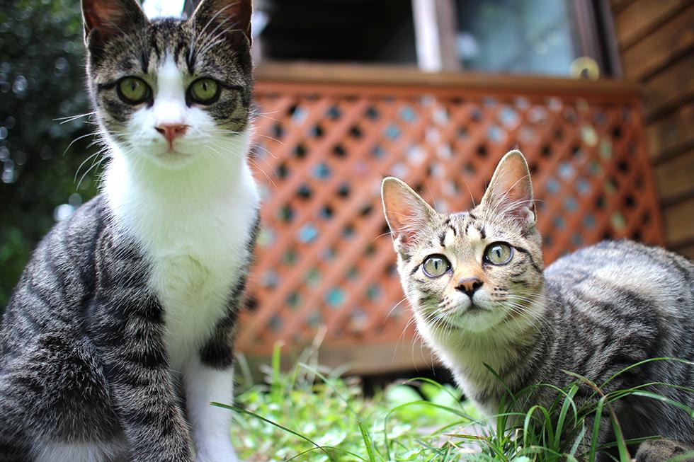 テンさん(左)、キッコさん(右)やんちゃ盛りの6ヶ月だそうです