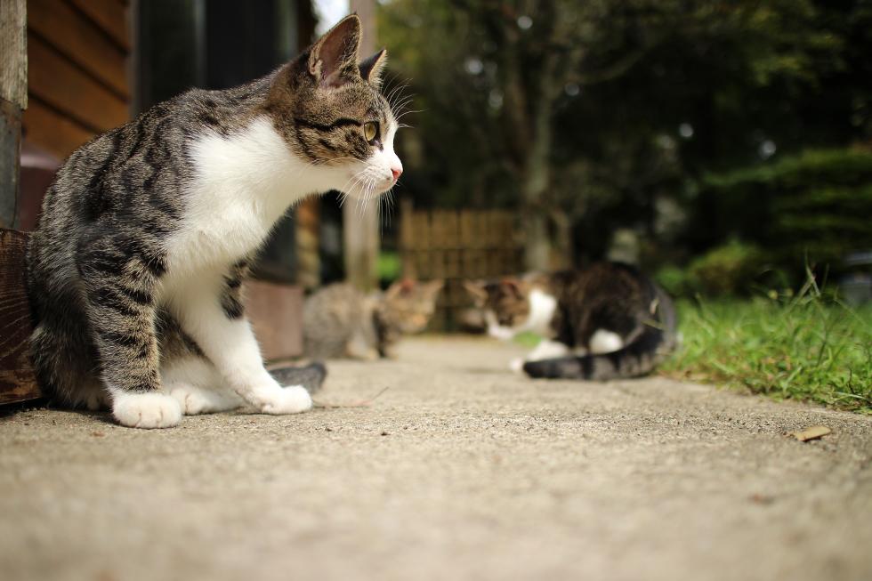 3匹の仔猫さん広いお庭で遊んでおりました