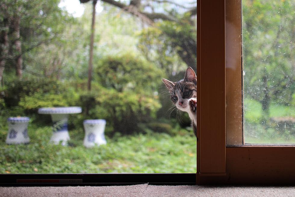 お食事中は入れないので外からのぞくテンさん