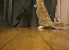 ダブルボディアタック!と言うかべちゃっした猫パンチ