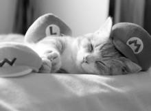 マリオ・ルイージ・ワリオ帽子と眠る菊之助
