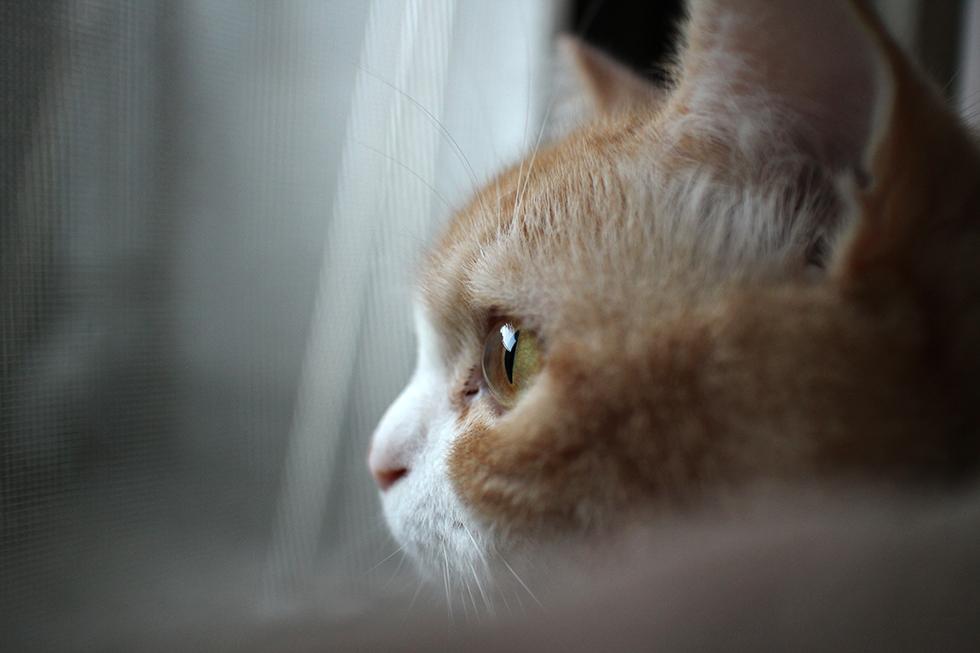 ビー玉のように澄んで透けてる猫の目