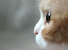 なかなかのビー玉感な猫の瞳
