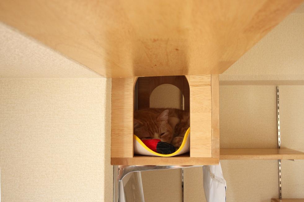 お気に入りの場所猫箱(キャットハウス)