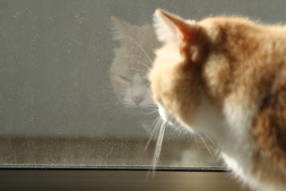 窓のサンにホレこの通り埃が!