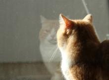 同居人と視線が合い目を細める