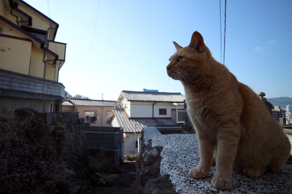 塀に飛び乗ってポーズする長崎のまちねこ