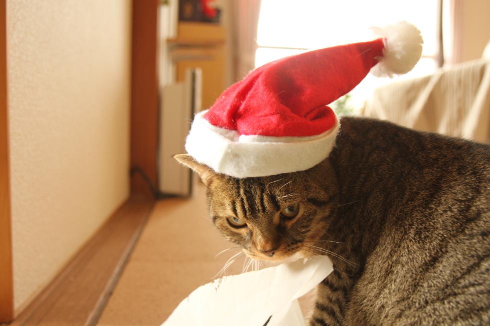 目つきの悪い力丸サンタさんです