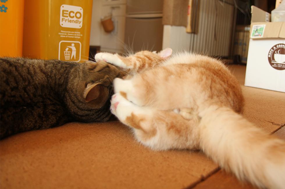 菊之助のフィニッシュホールド?猫キック