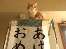 ネコの掛軸たれ下ろしであけましておめでとうございます!