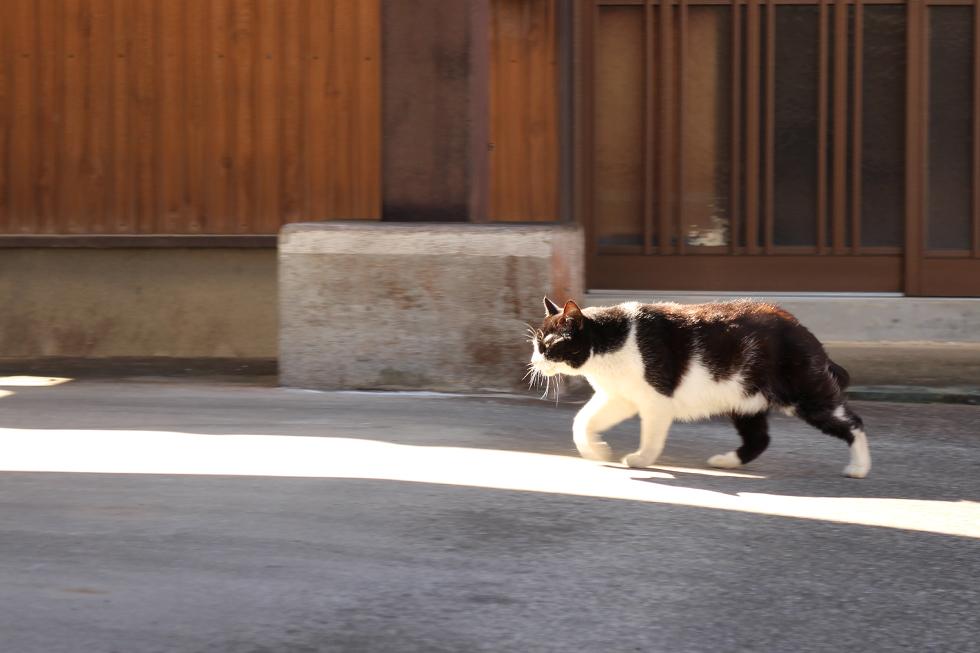 民家の駐車場にいたネコさん