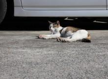 二王座にはいってすぐ、駐車場にいたネコさん
