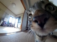 菊之助、力丸360度ドタバタ動画です