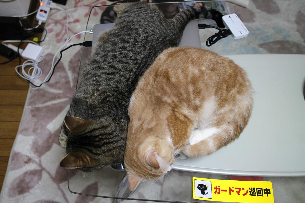 位置を変えて寝なおす菊之助と力丸でございます