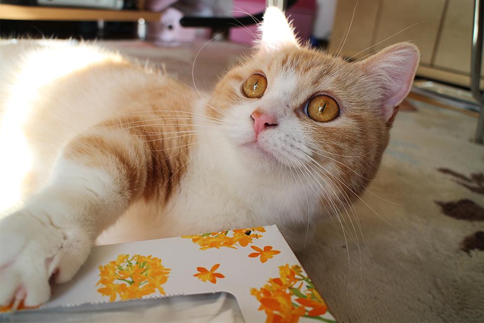 至高の猫キックをひとしきりおみまいし満足げ