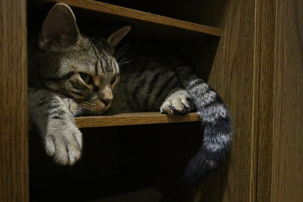 まだ眠たいんだよ、てなもんですか
