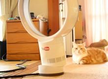 猫のわくぐりだけではない!羽無し扇風機のもう一つの使い方とは?マンチカン菊之助