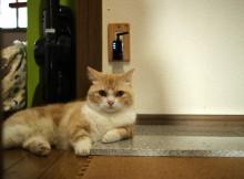 天然大理石に猫リラックス、今年の夏もひんやり暑さ対策に大活躍