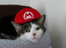 マリオ帽子かぶっていただき感謝です
