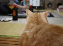 """筆と紙に毛氈(書道下敷)は""""猫遊具三宝""""として愛玩されております"""