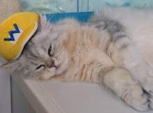 ワリオはあまり知らなくても、ワリオ帽子しーちゃんにピッタリです!