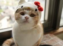 キティさんは仕事を選ばぬ人気者、見習えばミミィさんには並べるかもです