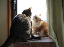 猫毛を毎日大量生産する行為すなわち喧嘩です