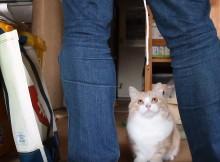ネコとのヒモ遊びにはタックルに注意!覚悟をもって受け止めましょう