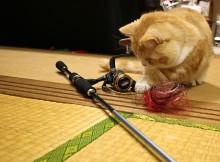 ネコも喜ぶ、スピニングリールのライン交換マンチカン菊之助