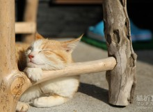 猫の島深島また行きます!