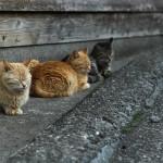 三食猫団子ー深島
