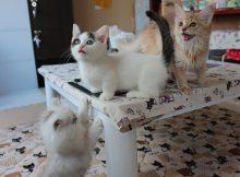 猫カフェ「ねこ」さんに入店、ラッキーなことに仔猫がわんさか!