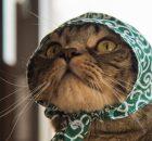 マンチカン力丸お似合いの泥棒お姿です。