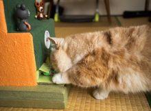 チューチューパニックTM完成。得点付、タイマー付の猫用ワニワニパニックです。
