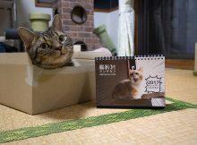 """猫折れ2017カレンダーができました!/家庭画報""""読者の「私の猫自慢」""""に菊之助"""
