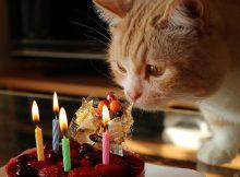 ケーキのお飾りに興味津々の菊之助