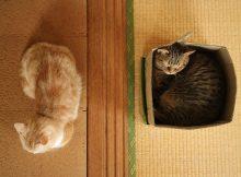 上から見るとこんな感じでお昼寝です