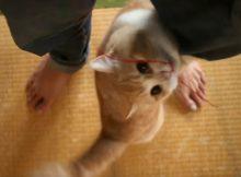 敬愛なる猫とのふれあいは爪を切って~脚間で遊ぶ~