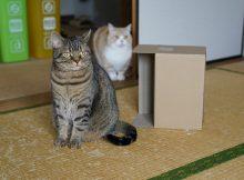 ぼっちでも楽しむ猫の遊びかた2選。一人遊びが上手な力丸