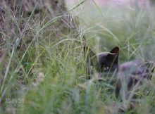 黒猫さんのかくれんぼ